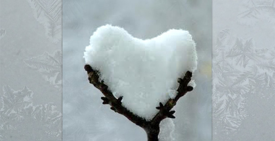 Snow heart. The snow landed in a tree branch in the shape of a heart